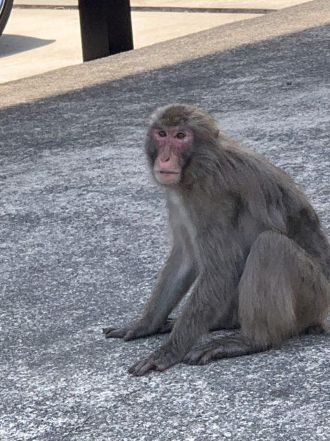 🐒 猿 🐵