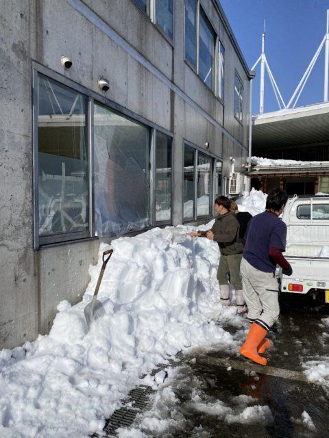 雪被害. 除雪, 仮補修養生(福井市)