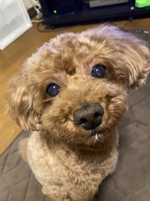 KRD愛犬